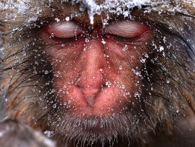 Nature andrew_jktan_snowmonkey