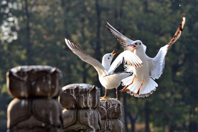 Gwee_Bird