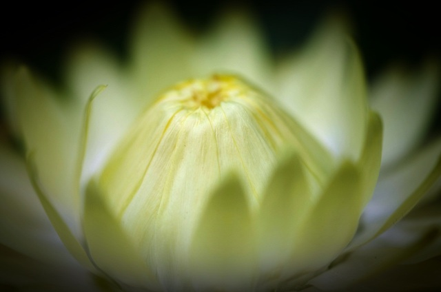Gwee_Flower