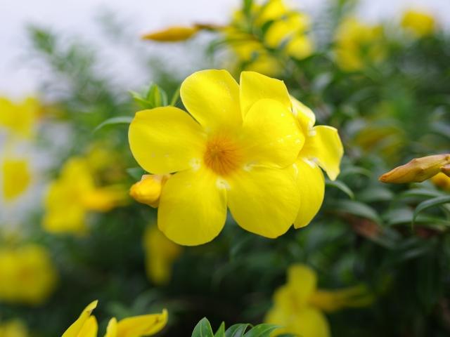 Allan_Flower-1