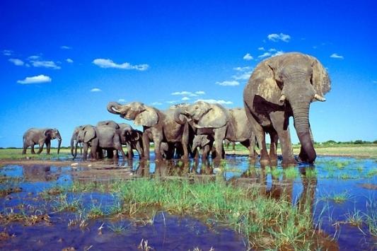 0e4_etosha_national_park_namibia03 profilenamibia d com