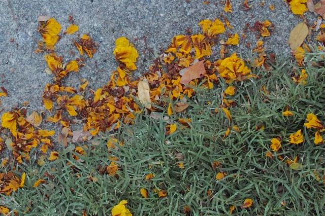 flowers crop