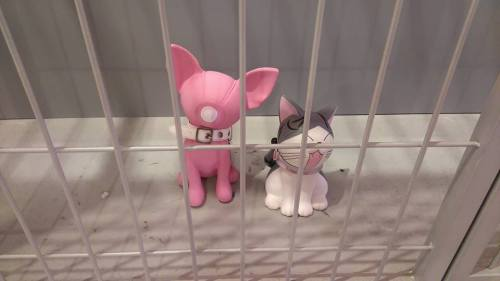 janet toh Help, I am locked up here with a doggy
