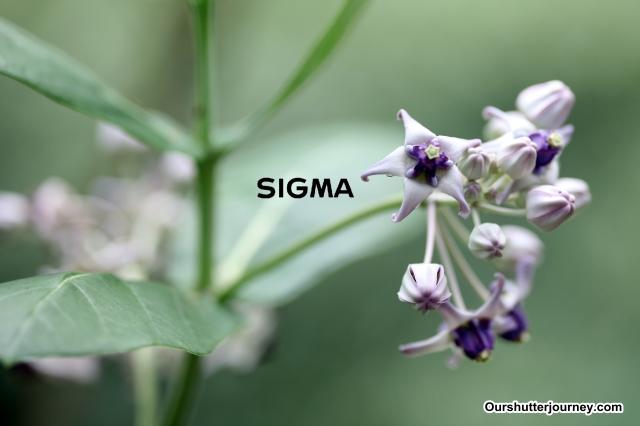 IMG_5074Sigma